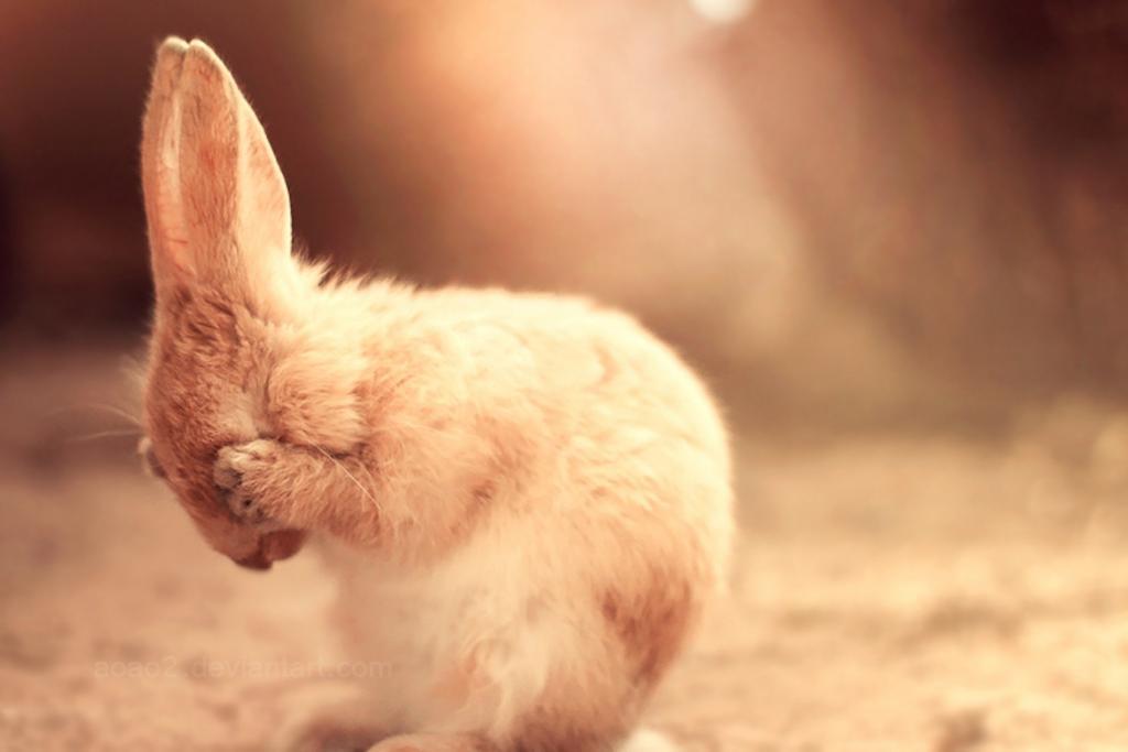 Hard_bunny