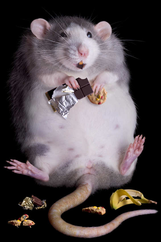 Bad|Fat|Rat
